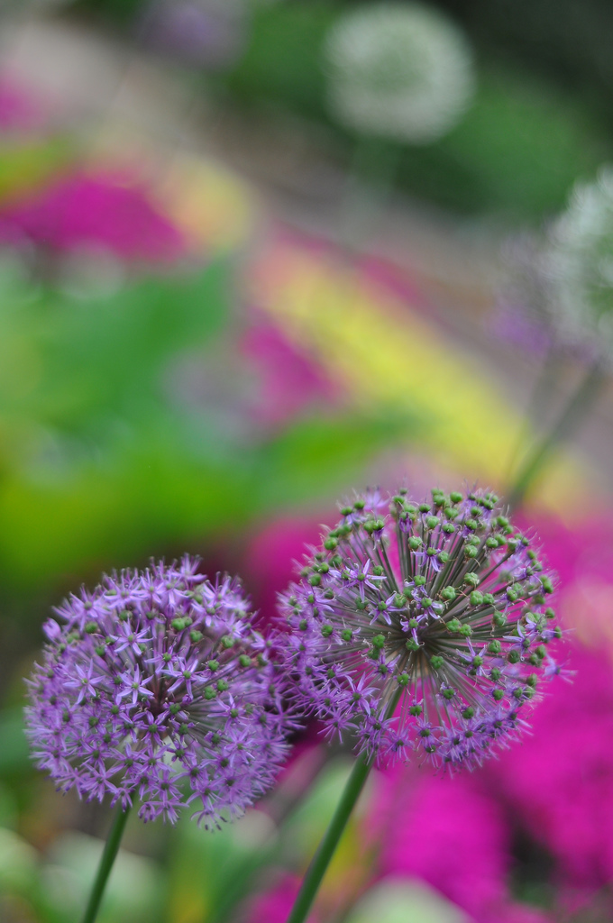 dof flowers colors nature