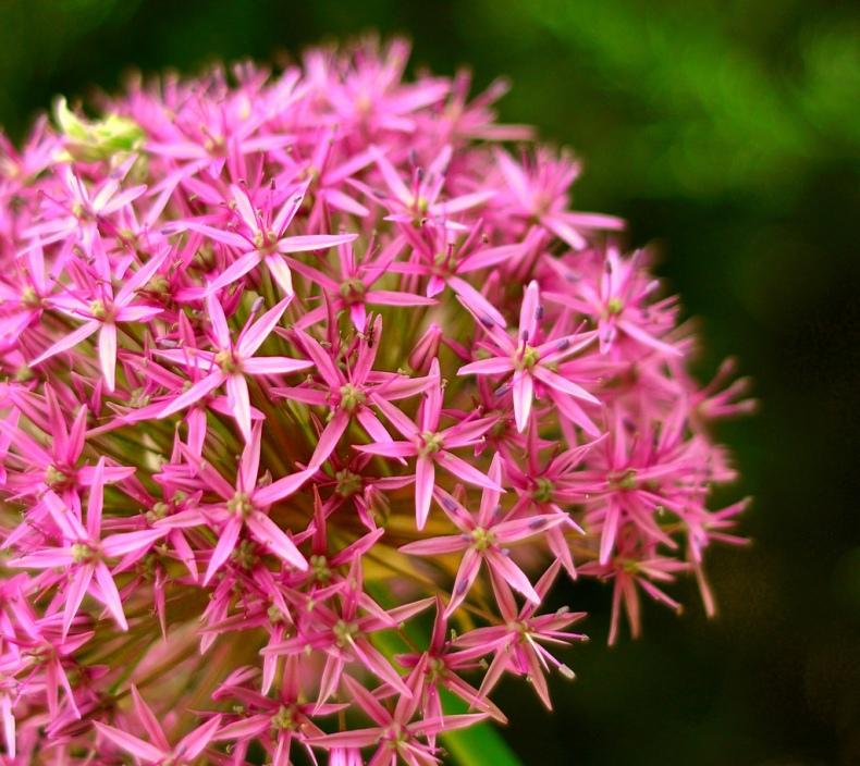 dof bokeh flowers