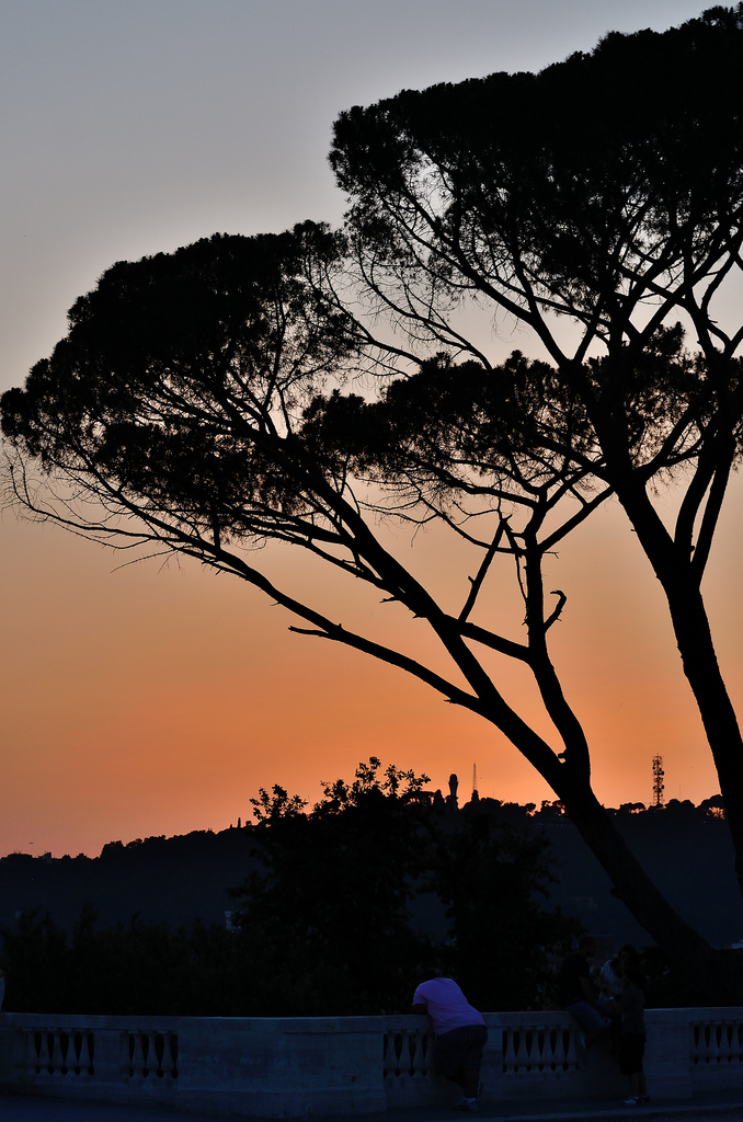 trees roma italia sunset
